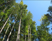 Wald grünen Wald