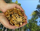 Restfeuchte getrocknete Holzschnitzel aus den Wäldern der Region