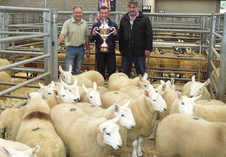 Champion Pen Cheviots