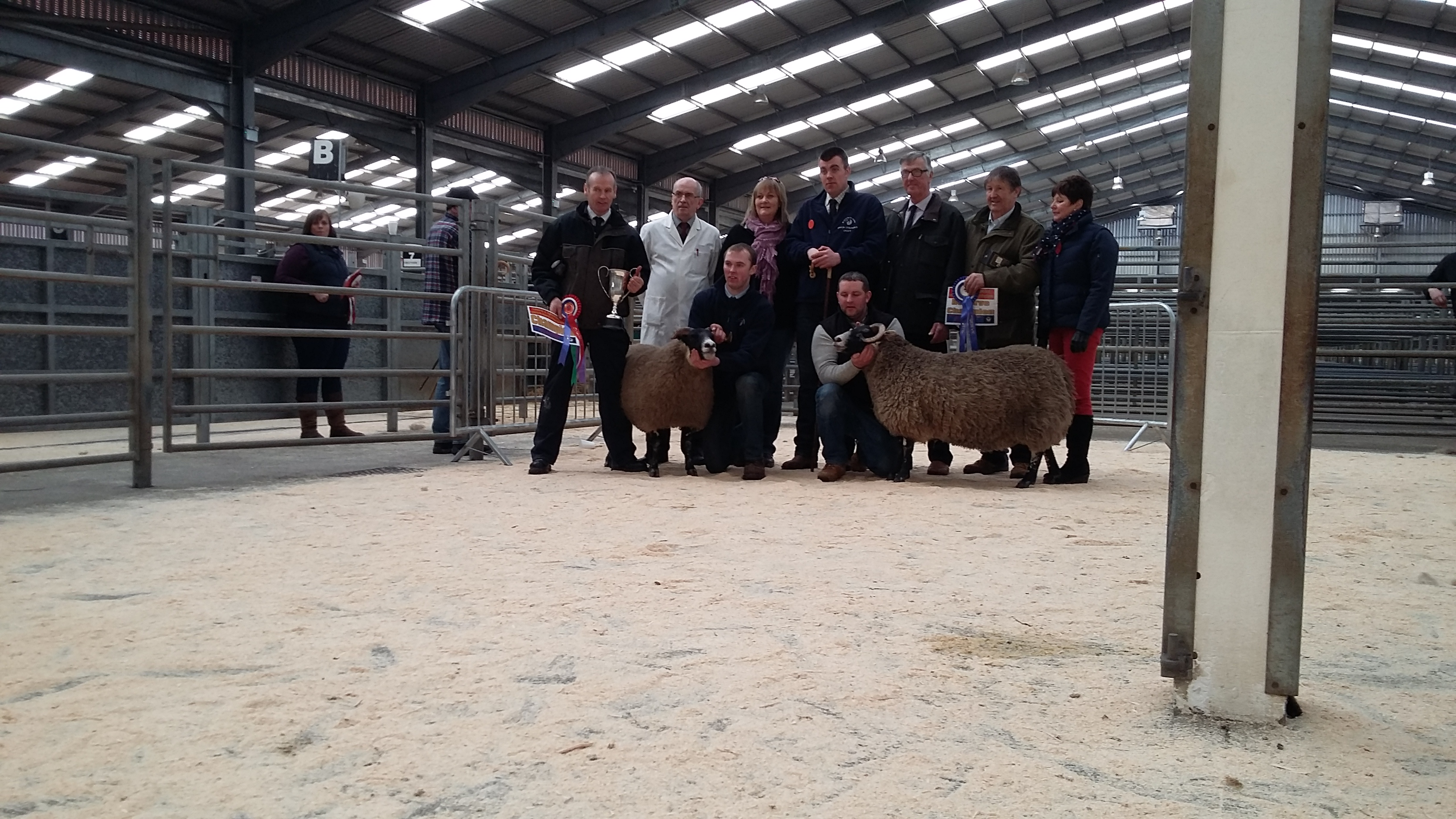 Blackface In-Lamb Show & Sale held at Lanark on Saturday 27th February, 2016.