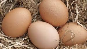Rasmusen's Free Range Eggs