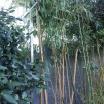 Pflanzenhalterung