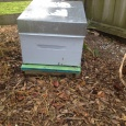 Our one hive ready for winter