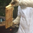 The bees have double layered on the  frame - not so easy to get off