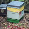 the new hive with its yellow hoeny box
