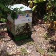 Bees bearding - keeping the hive temperature constant