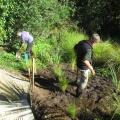 Planting02