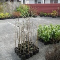 Planting09