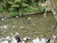 Bularangi Guided Fly Fishing