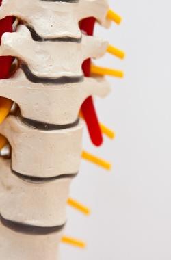 Chiropraktik & Osteopathie