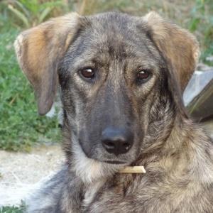 Charlie - Als Welpe im Oktober 2014 von unserer Tierärztin total verwahrlost gefunden.