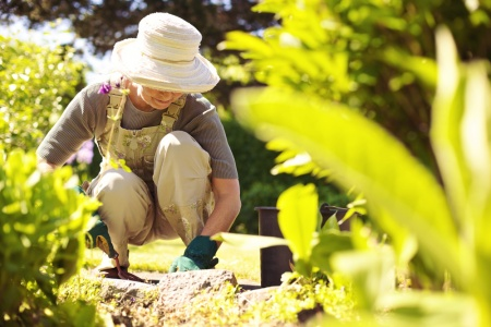 Maintaining Home and Garden