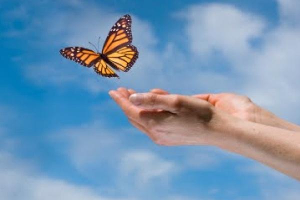 Butterfly in Hands