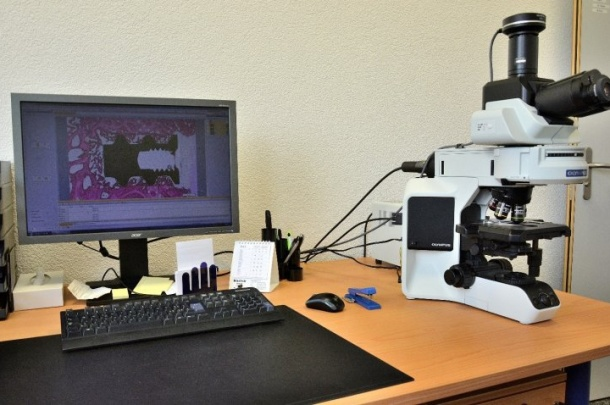Microscopic analysis and fluorescence microscopy using the Olympus BX-43 equipped with lamp Olympus U-HGLGPS and camera XC-30.