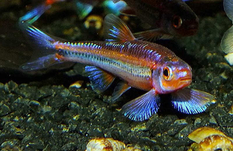 Teichfische teichfische bei uns im angebot for Robuste zierfische